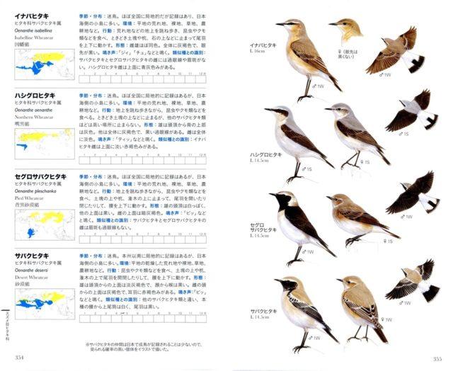 イラストを担当したフィールド図鑑「日本の野鳥」が発売になりました ...