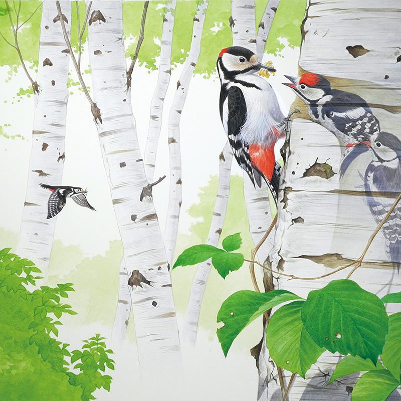 野鳥の生態を描いた一枚絵